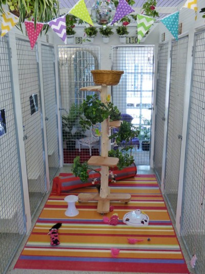 Cattery Play Area